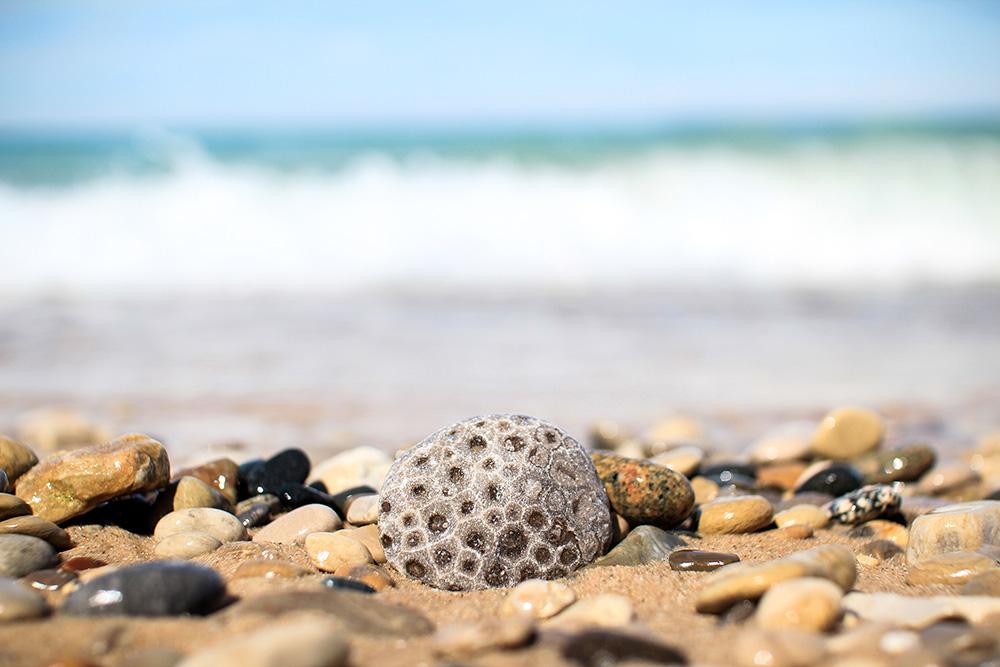 Petoskey stone on a beach.