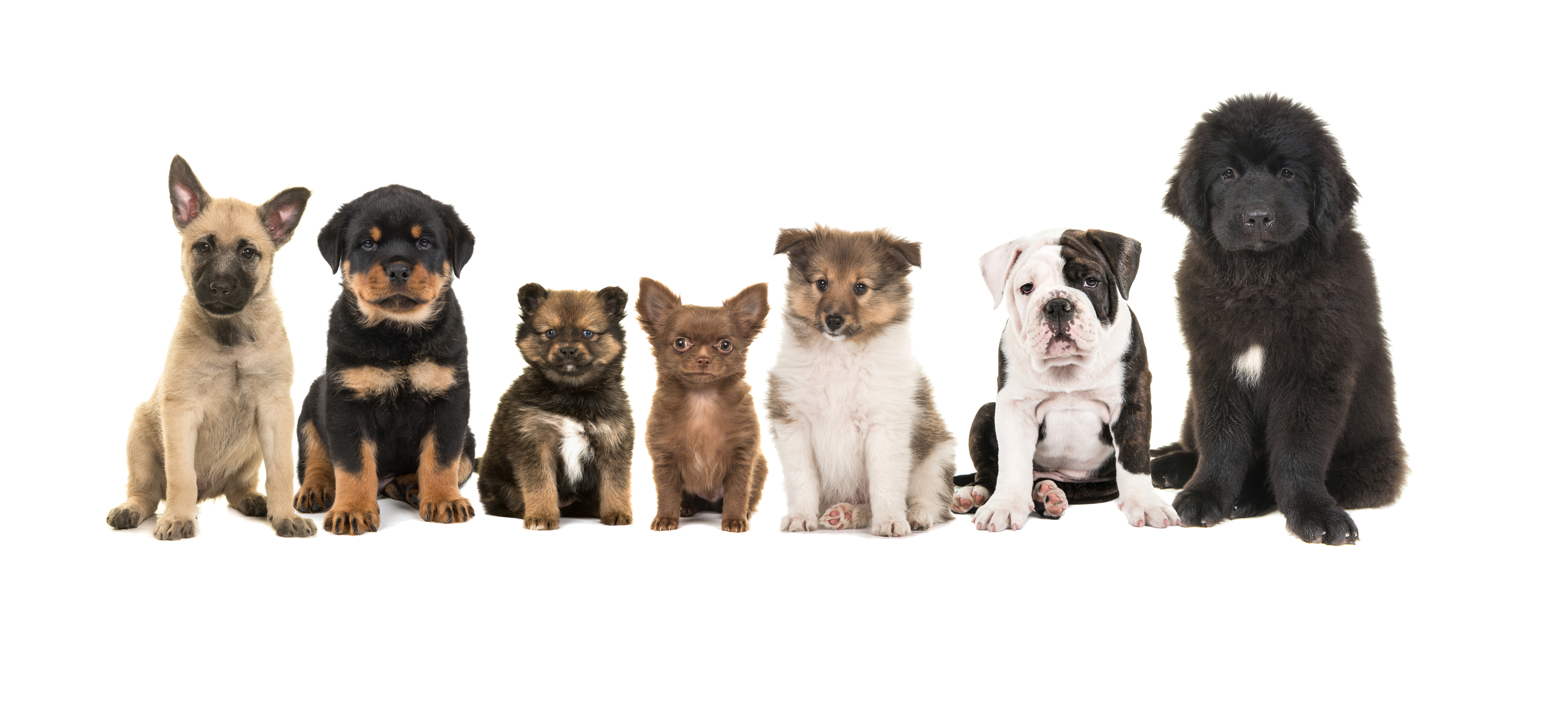 Seven different breeds of puppies.