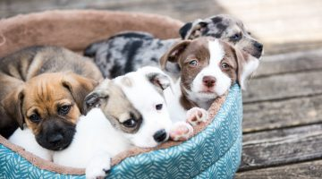 Featured Image: No Love Like Puppy Love! Choosing the Best Puppy for Your Family