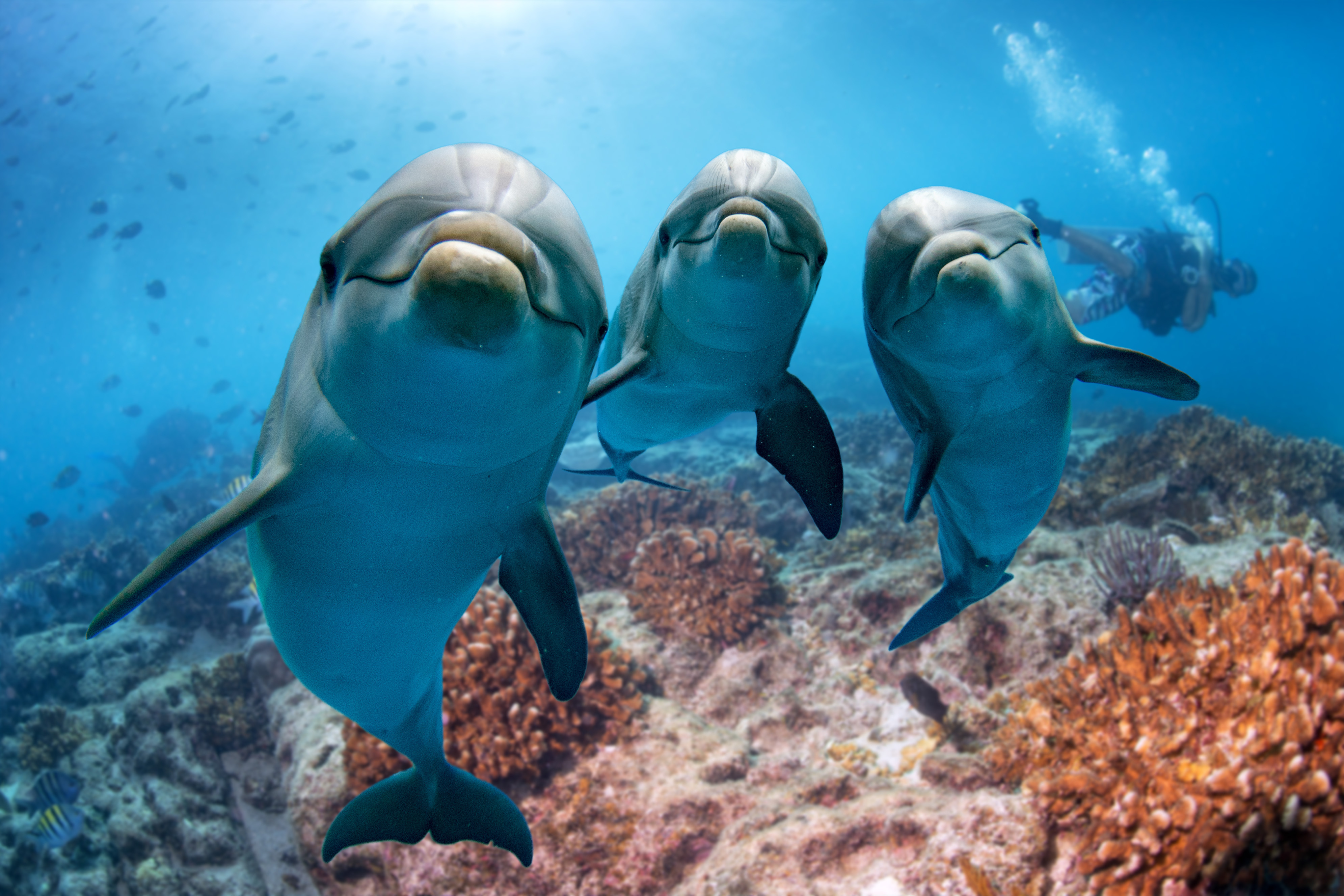 Featured Image: What Do Dolphins Symbolize?